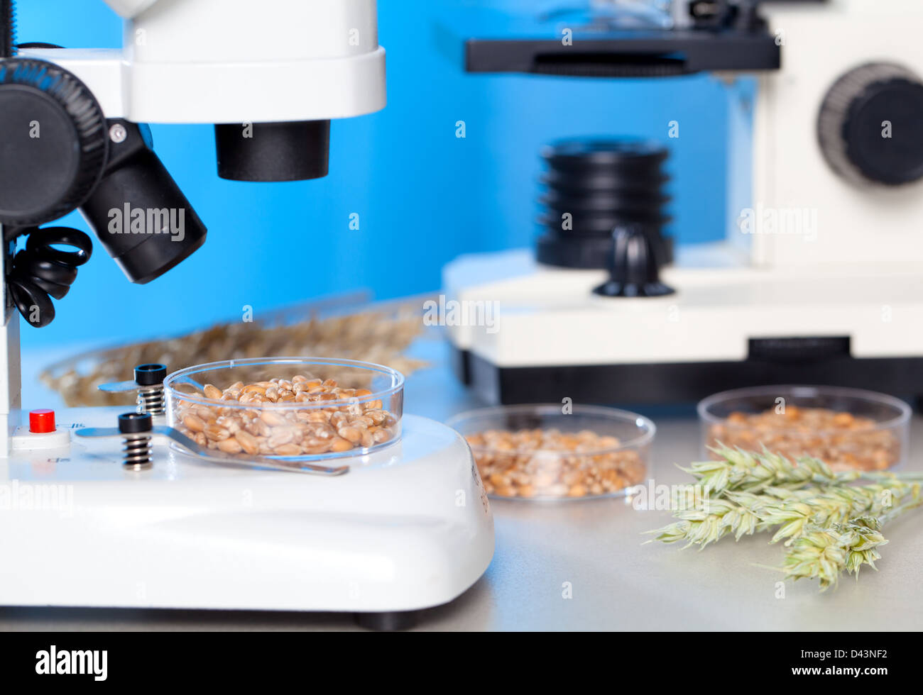 Microbiological Testing for Food Quality - Stock Image