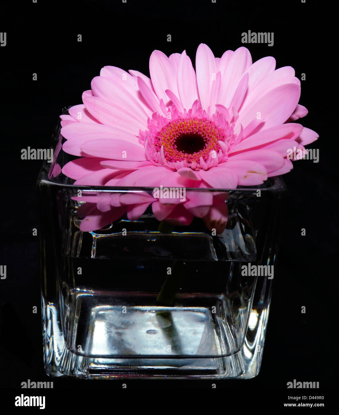 Flower Vase Stock Photos Flower Vase Stock Images Alamy