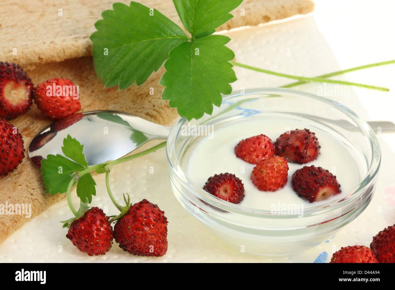 Breakfast with crispbread and wild berries. - Stock Image