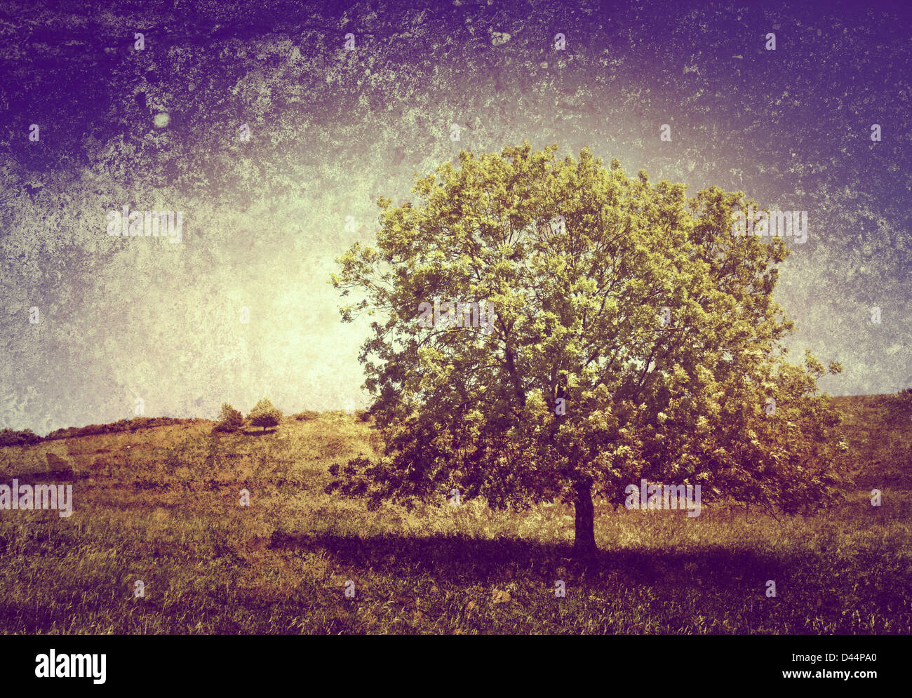 tree on textured background - Stock Image