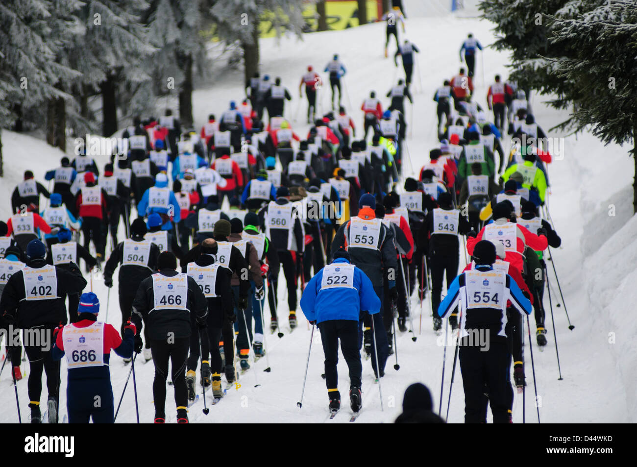 Participants go uphill during the Bieg Piastow cross-country race, Jakuszyce, Poland. - Stock Image