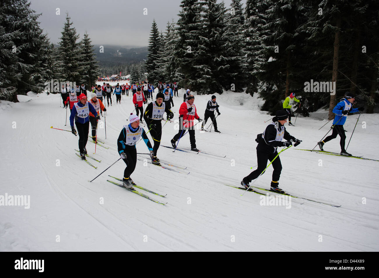 Cross-country skiers during the Bieg Piastow cross-country race, Jakuszyce, Poland. - Stock Image