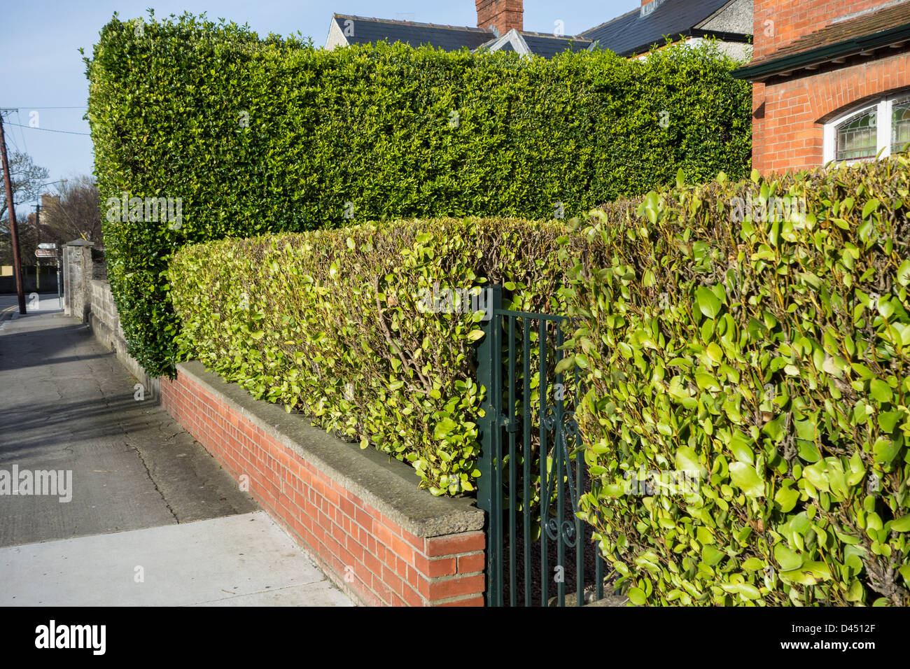 A well pruned hedge around a domestic garden - Holmpatrick, Skerries, Co.Dublin, Ireland - Stock Image