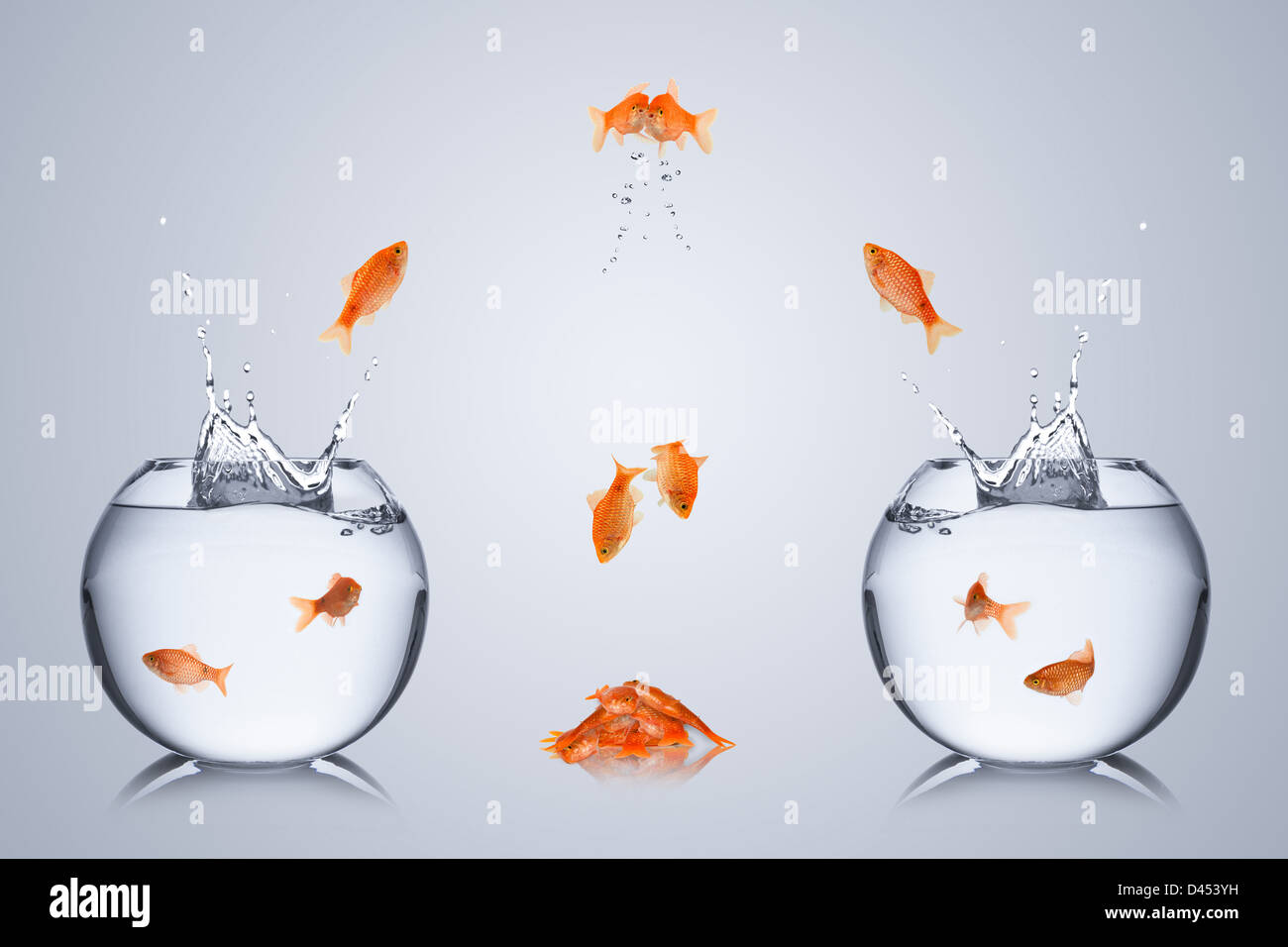 fishes fail to change bowl and collide in the air - Stock Image