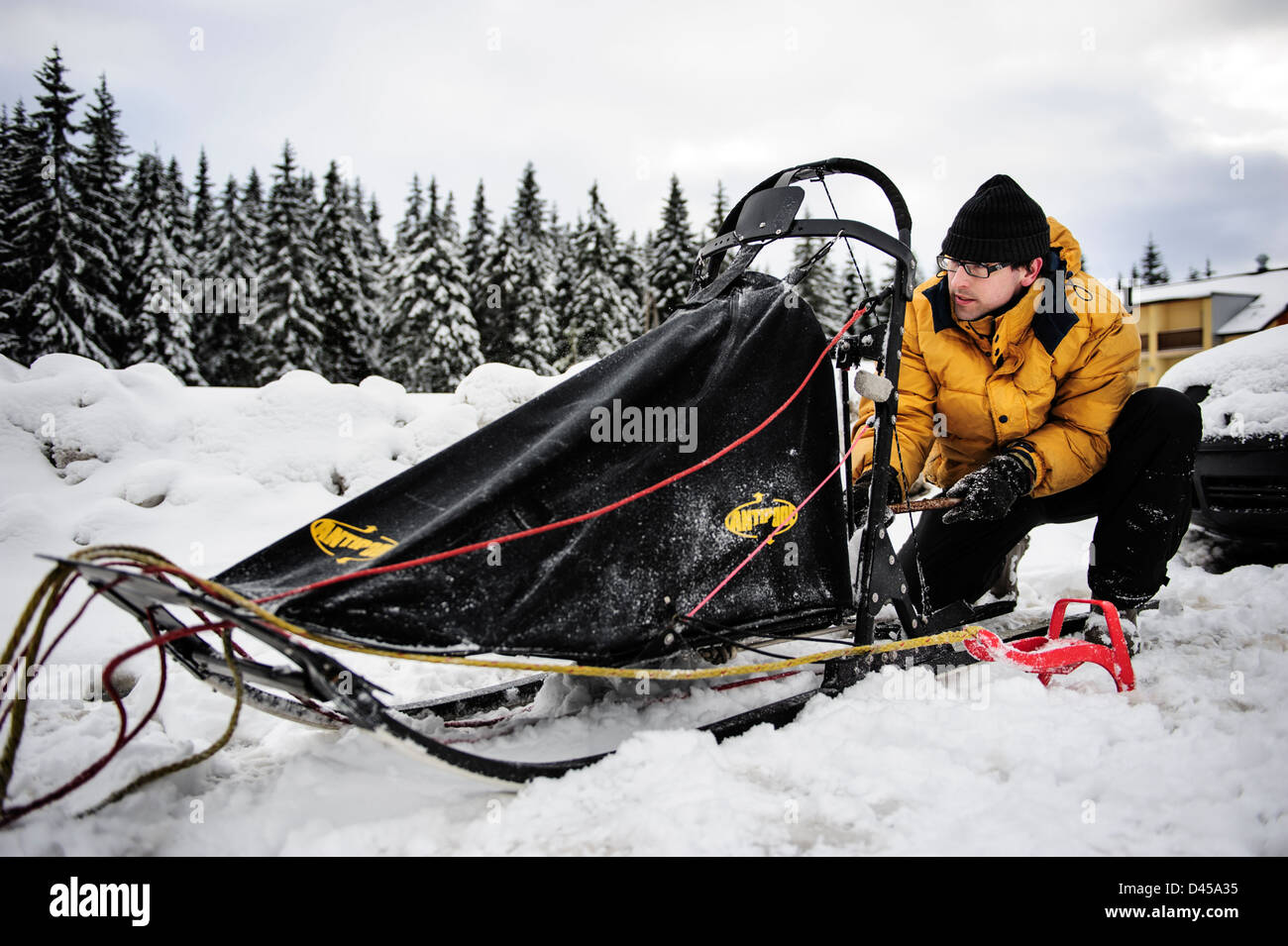 A musher preparing his sled before the competition, Jakuszyce, Poland. - Stock Image