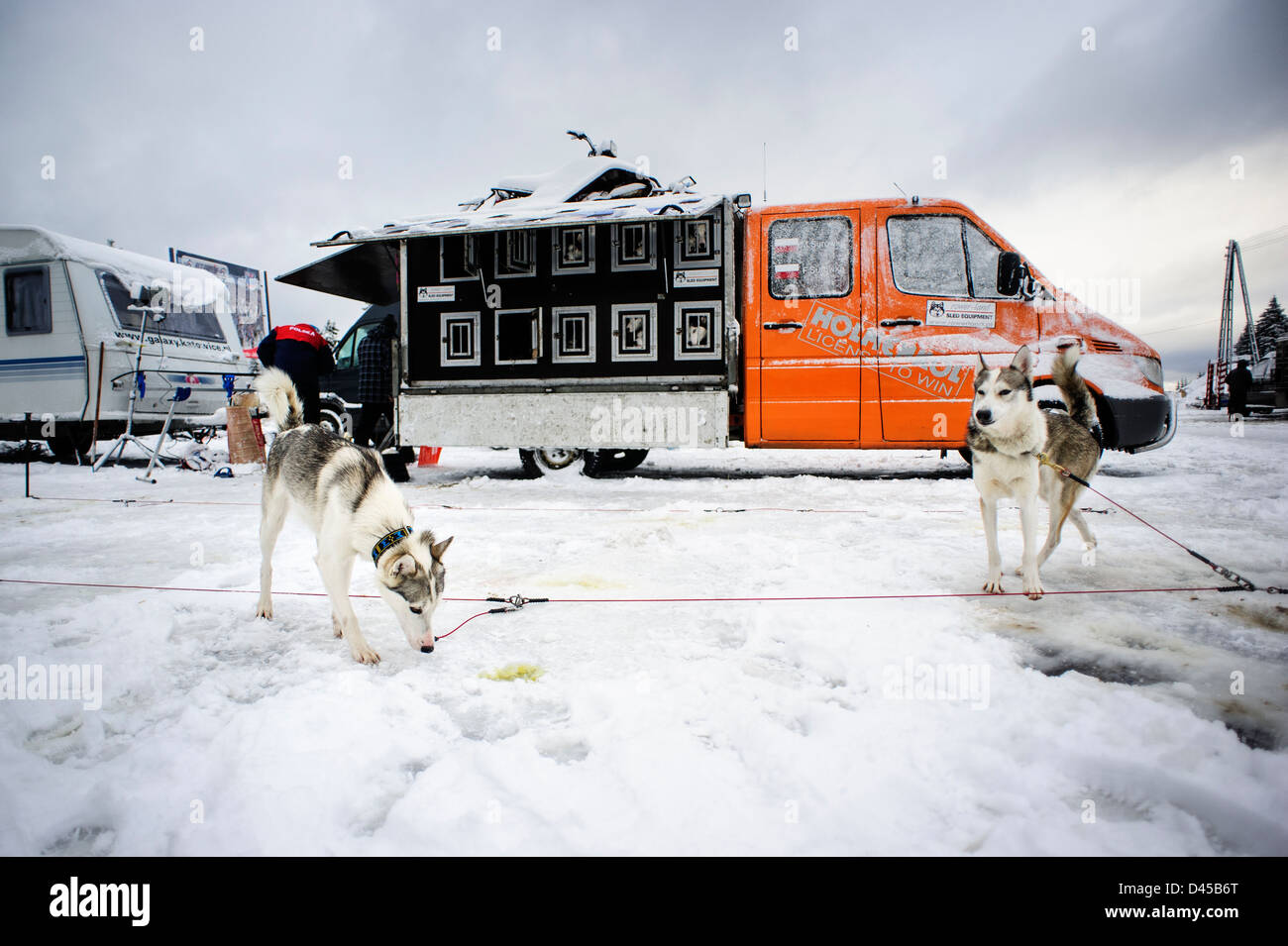 Sled dogs before racing at the Border Rush competition in Jakuszyce, Poland. - Stock Image