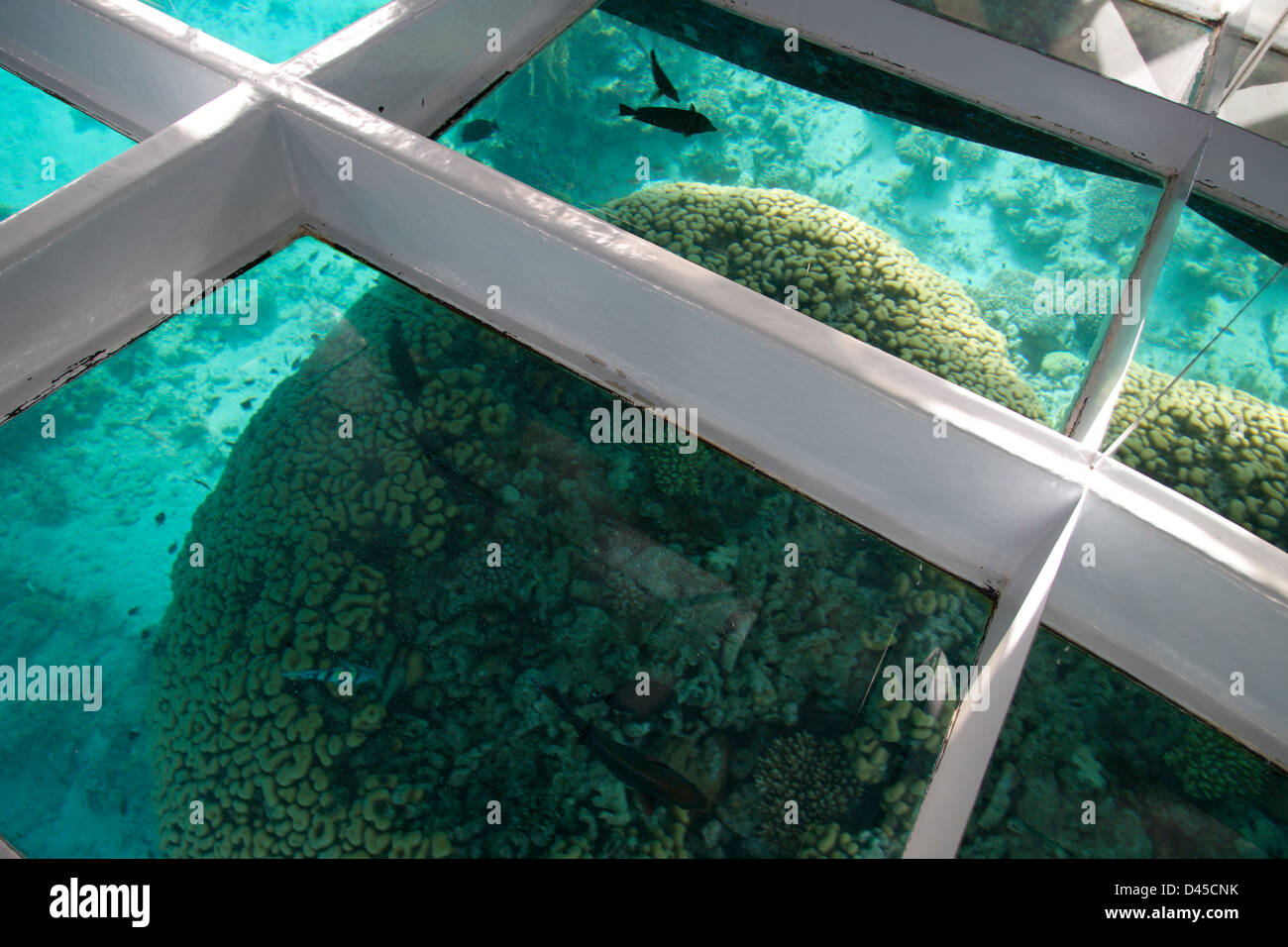 Egypt, Sharm El-Sheik, brain corals through glass bottom boat. - Stock Image