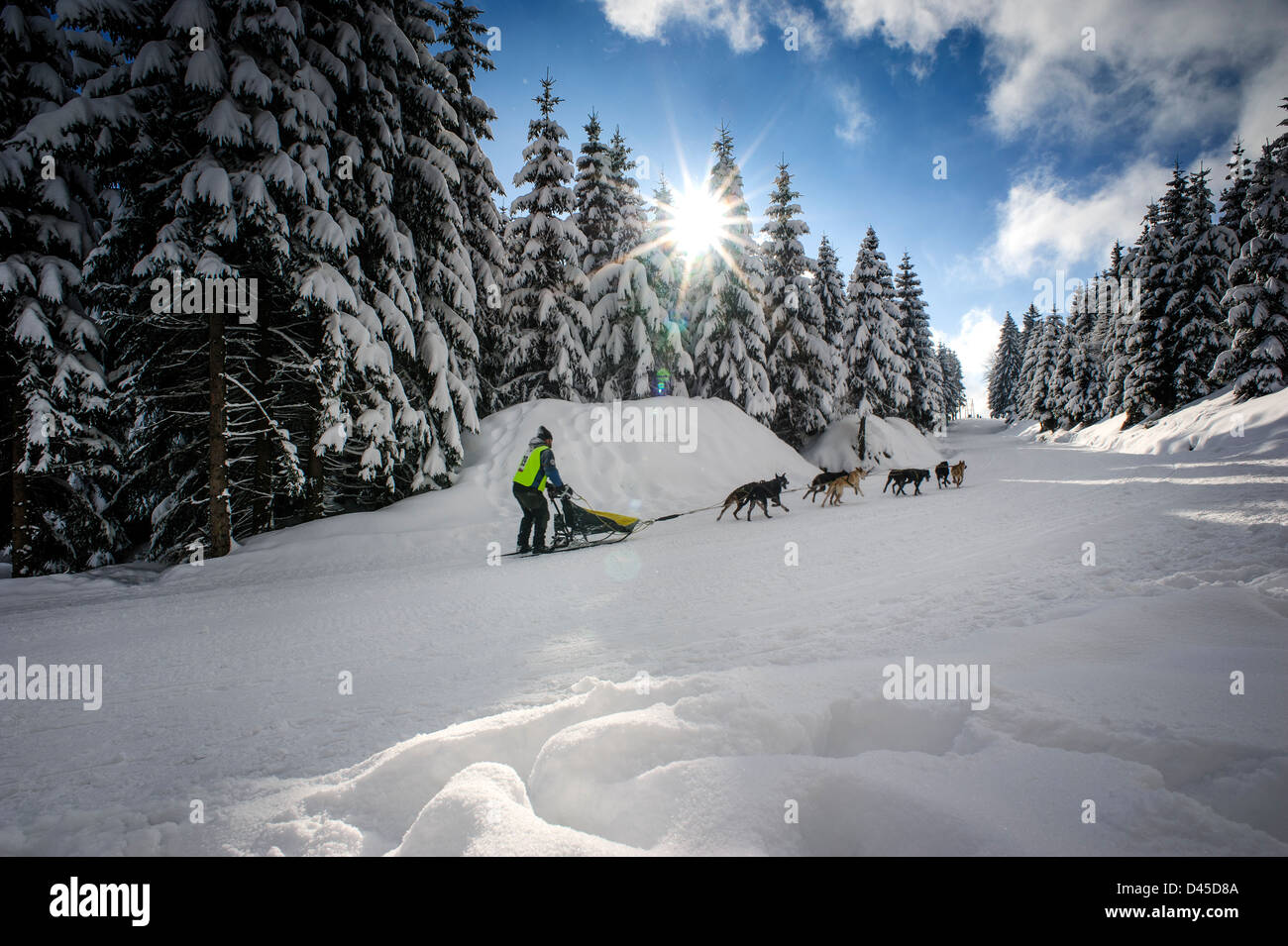 The 2013 Border Rush Sled dog competition takes part in the stunning scenery of the Izery mountains, Poland. - Stock Image
