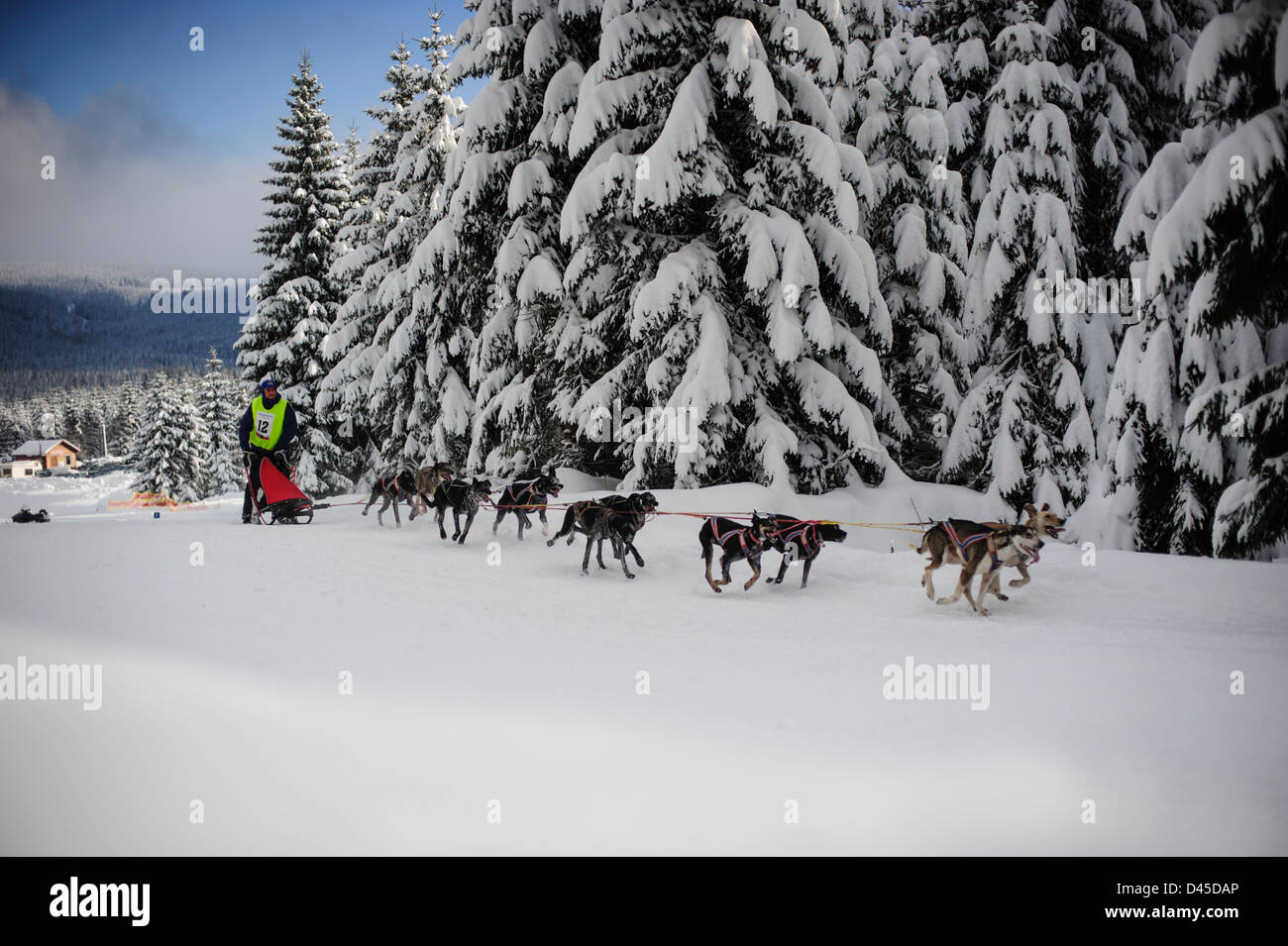 A sleddog team racing in the Izery mountains, Jakuszyce, Poland. - Stock Image
