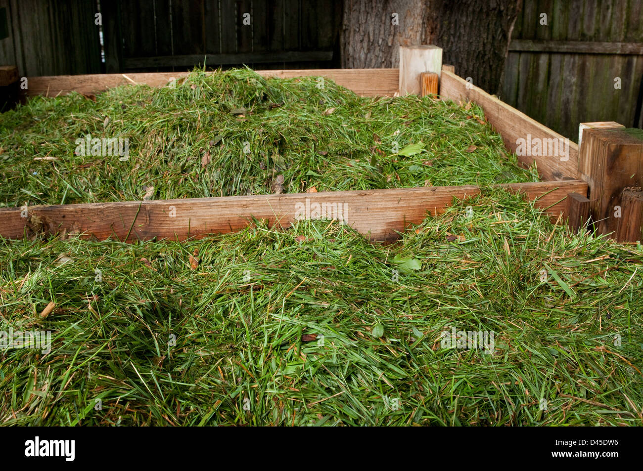 fresh cut lawn clippings piled in a compost bin - Stock Image