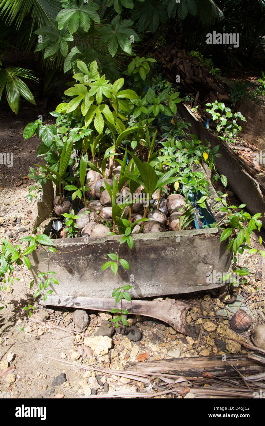 Plants growing out of a repurposed concrete container. - Stock Image