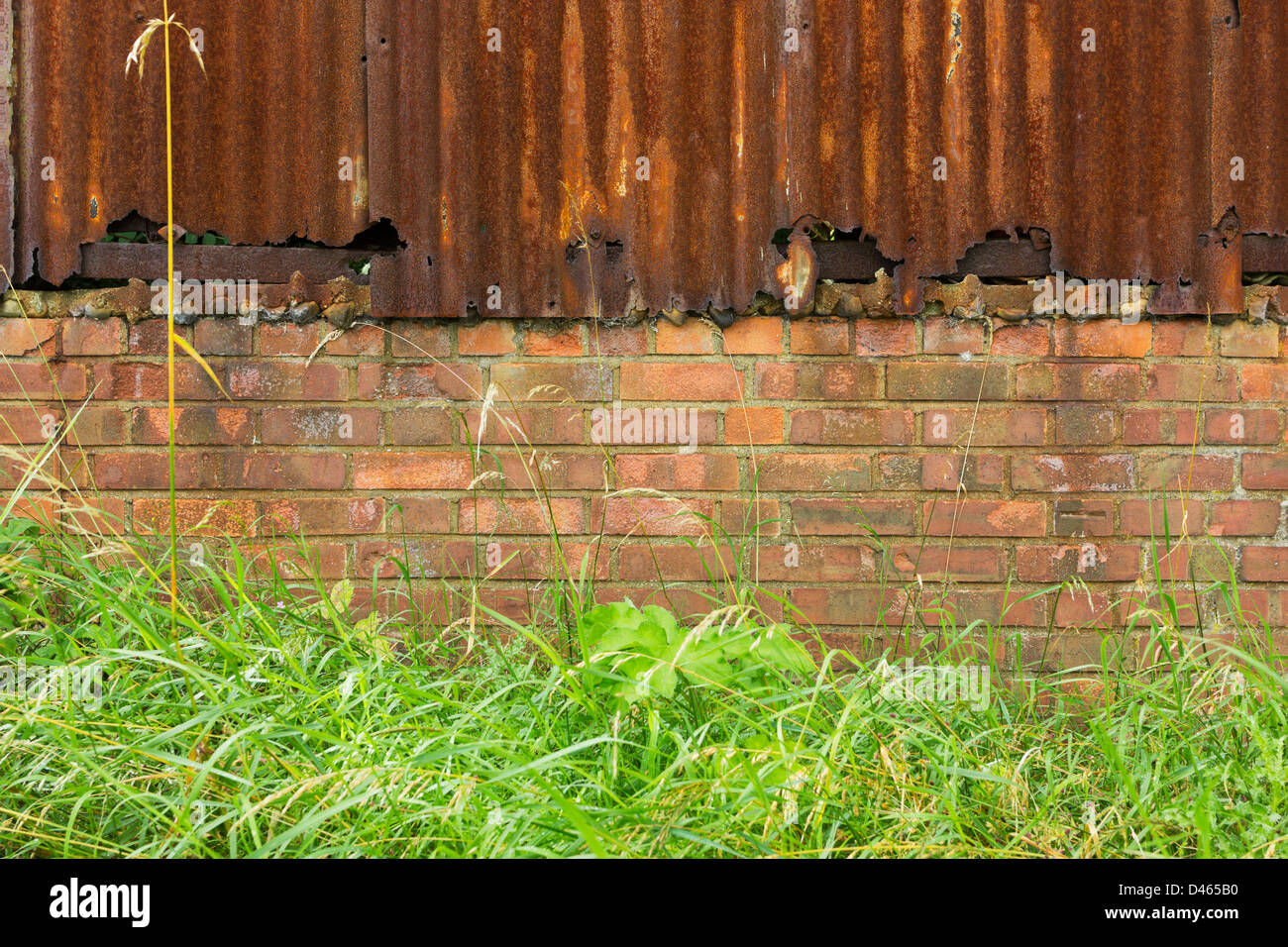 Background of rusty corrugated iron and brick wall in front of grass and weeds - Stock Image