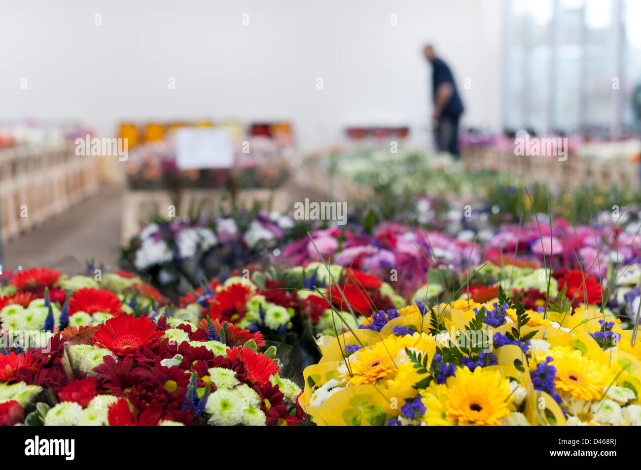 Sandy, Bedfordshire, UK. 6th March 2013. A beautiful array of flowers are stacked in rows at Flower wholesaler Savins, - Stock Image