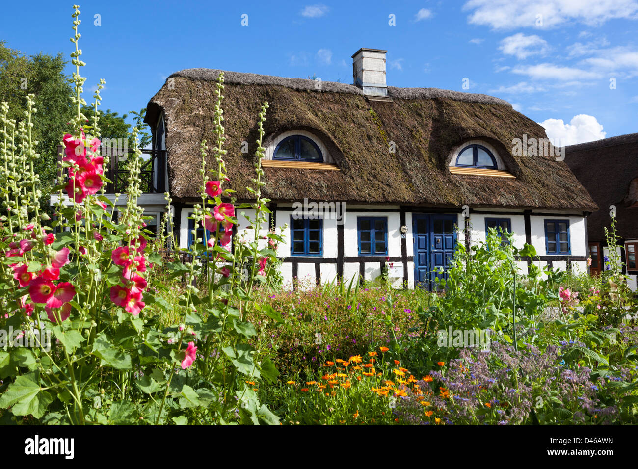Traditional half timbered thatched cottage with Hollyhocks - Stock Image