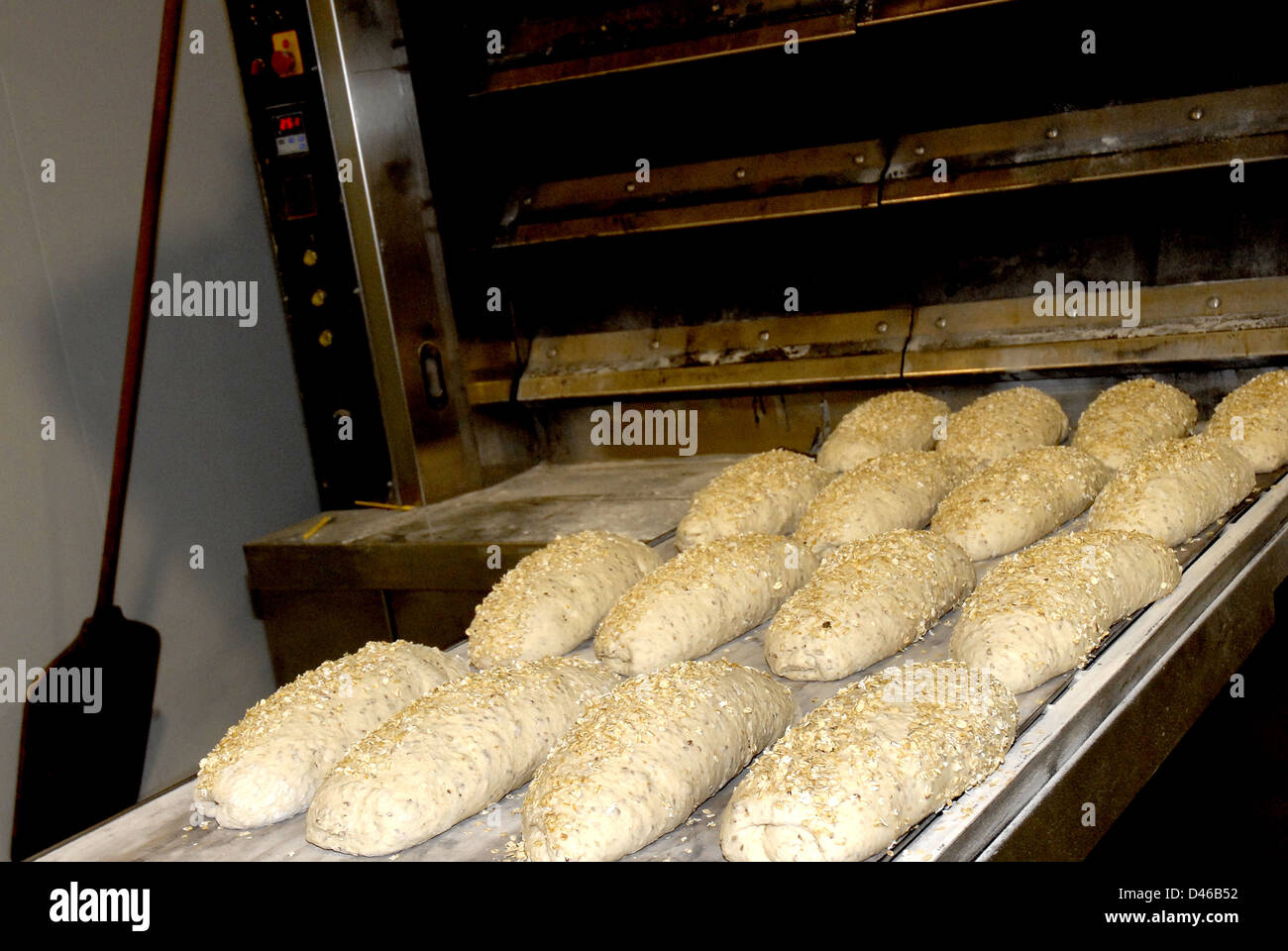 elaboration of artisan bread in the bakery - Stock Image