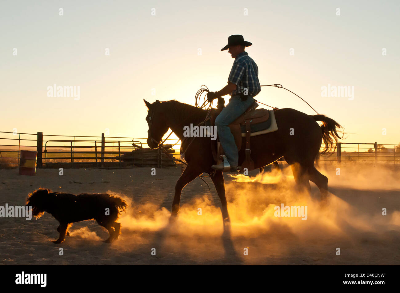cowboy with dog riding a horse silhoutted while roping in a dusty D46CNW