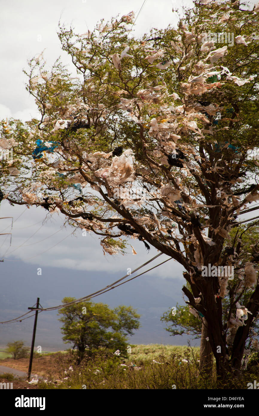 A tree filled with plastic bags, down wind from a landfill site on the island of Maui, Hawaii. - Stock Image