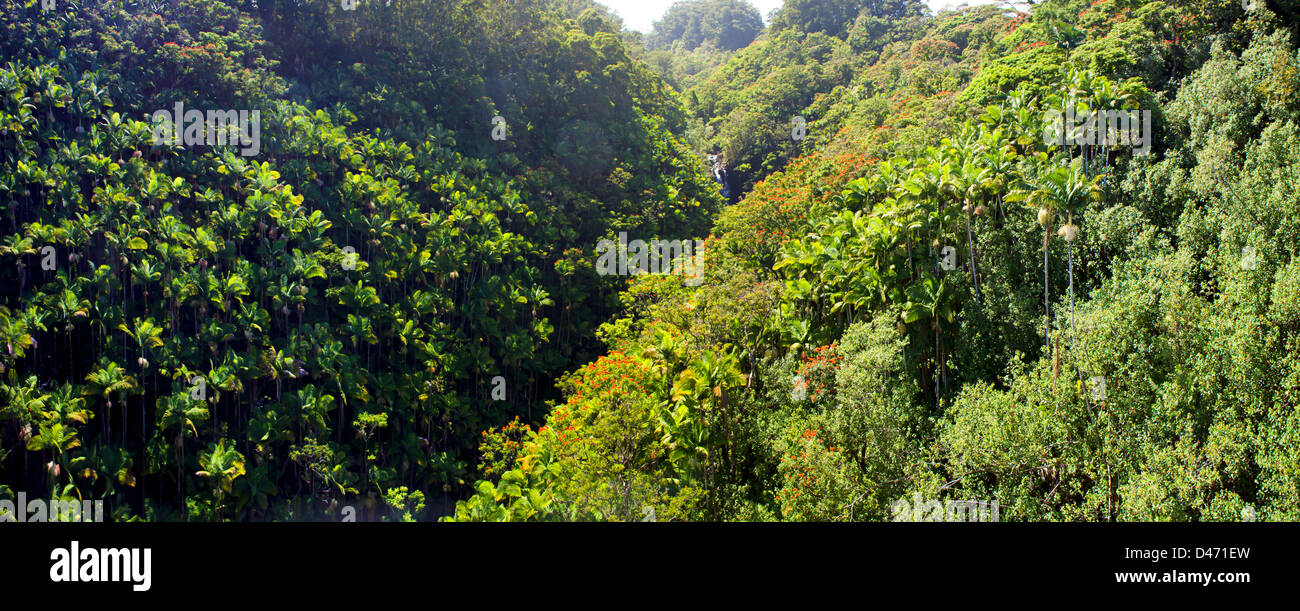 Lush tropical rainforest and Nanue Falls on the Hamakua Coast of the Big Island, Hawaii. - Stock Image