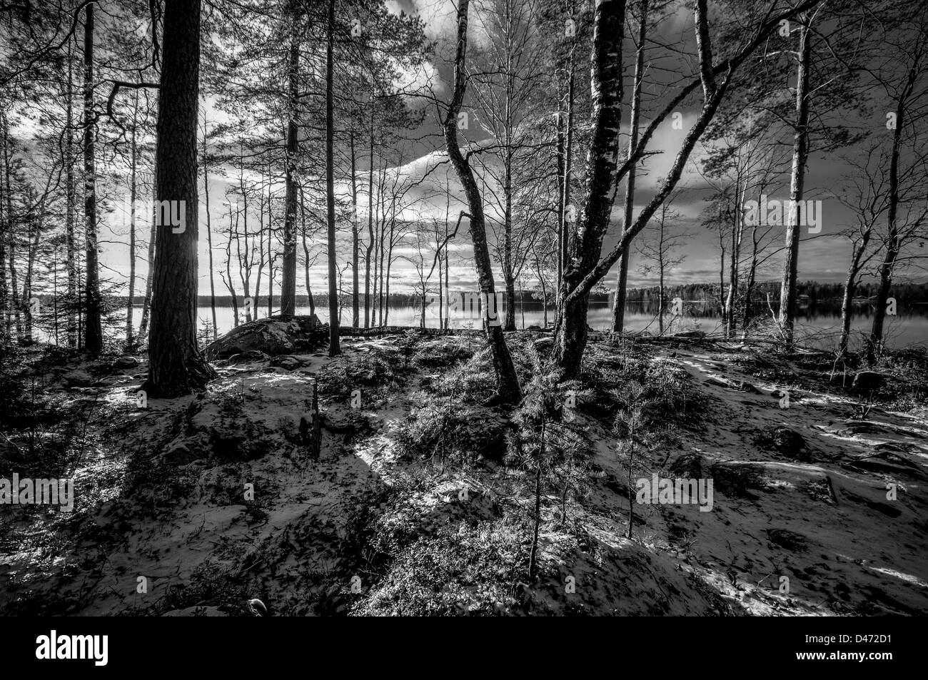 First snow on the ground in forest with a lake on the background - Stock Image
