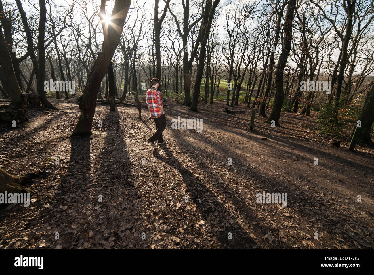Man in a red checked shirt with his back to us walking into the woods across long shadowy trees with the sun behind - Stock Image