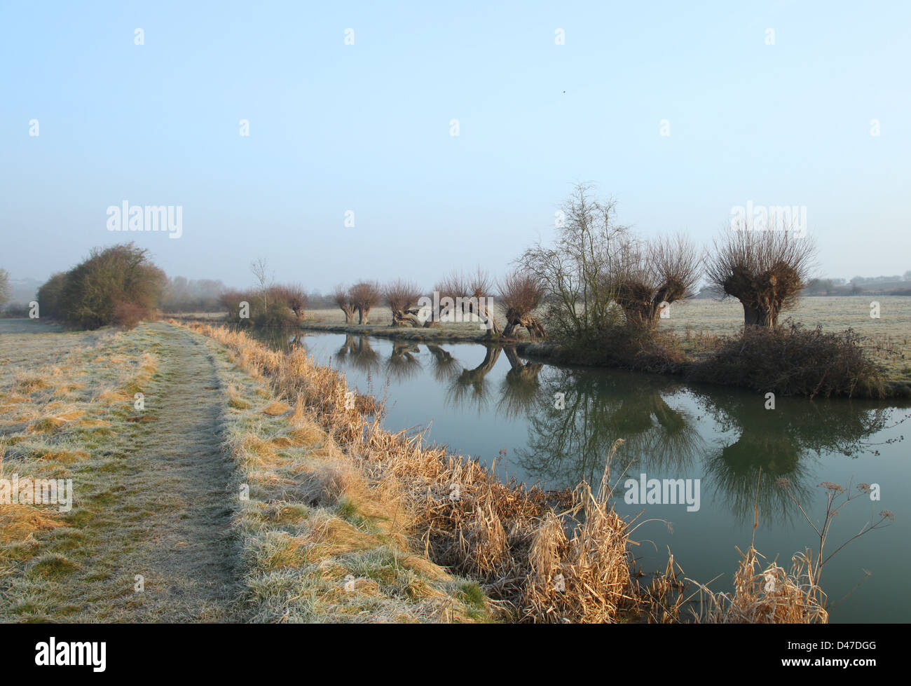 Willows on the Oxford Canal - Stock Image