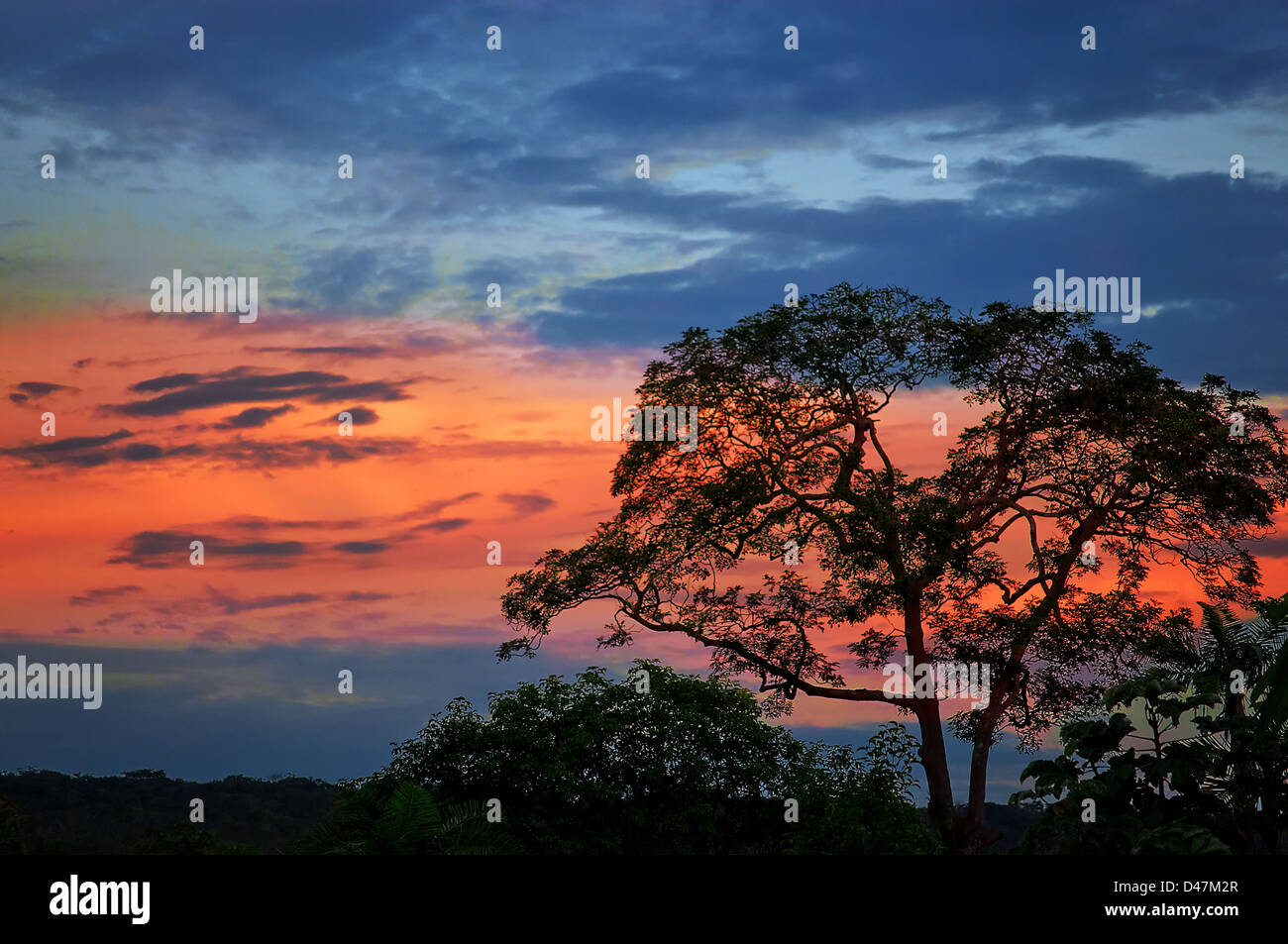 Dusk with a blue sky with a red band and the silhouette of a tree in the foreground. - Stock Image