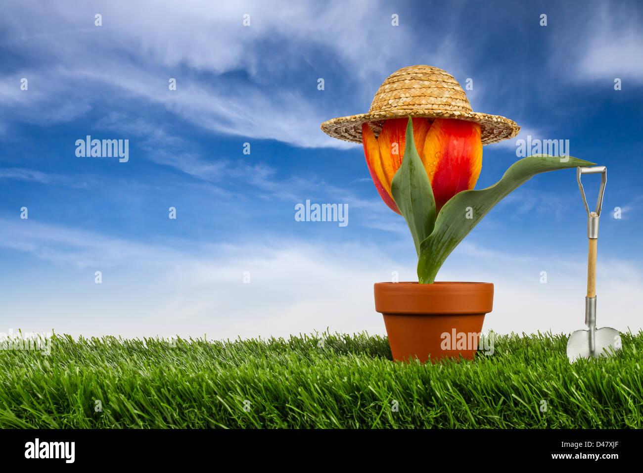Tulpe mit Sonnenhut auf Wiese vor blauem Himmel - Stock Image