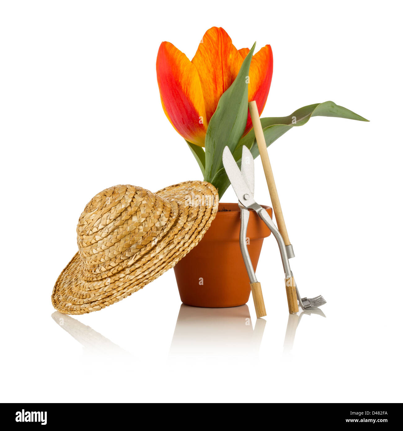tulip with straw hat and garden tools - Stock Image