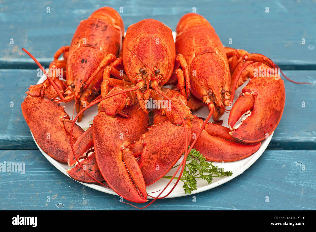 Seafood Platter With Lobster Stock Photos & Seafood ...