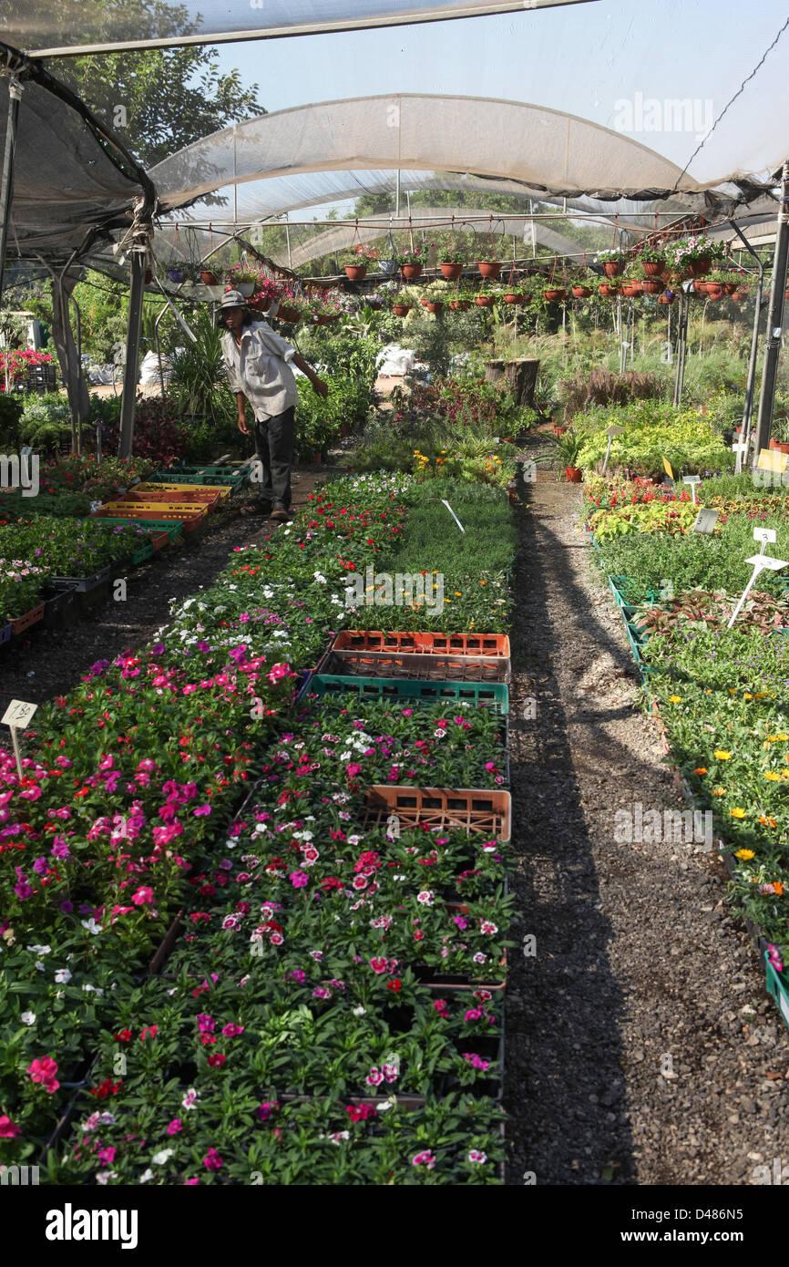 Garden Nursery - Stock Image