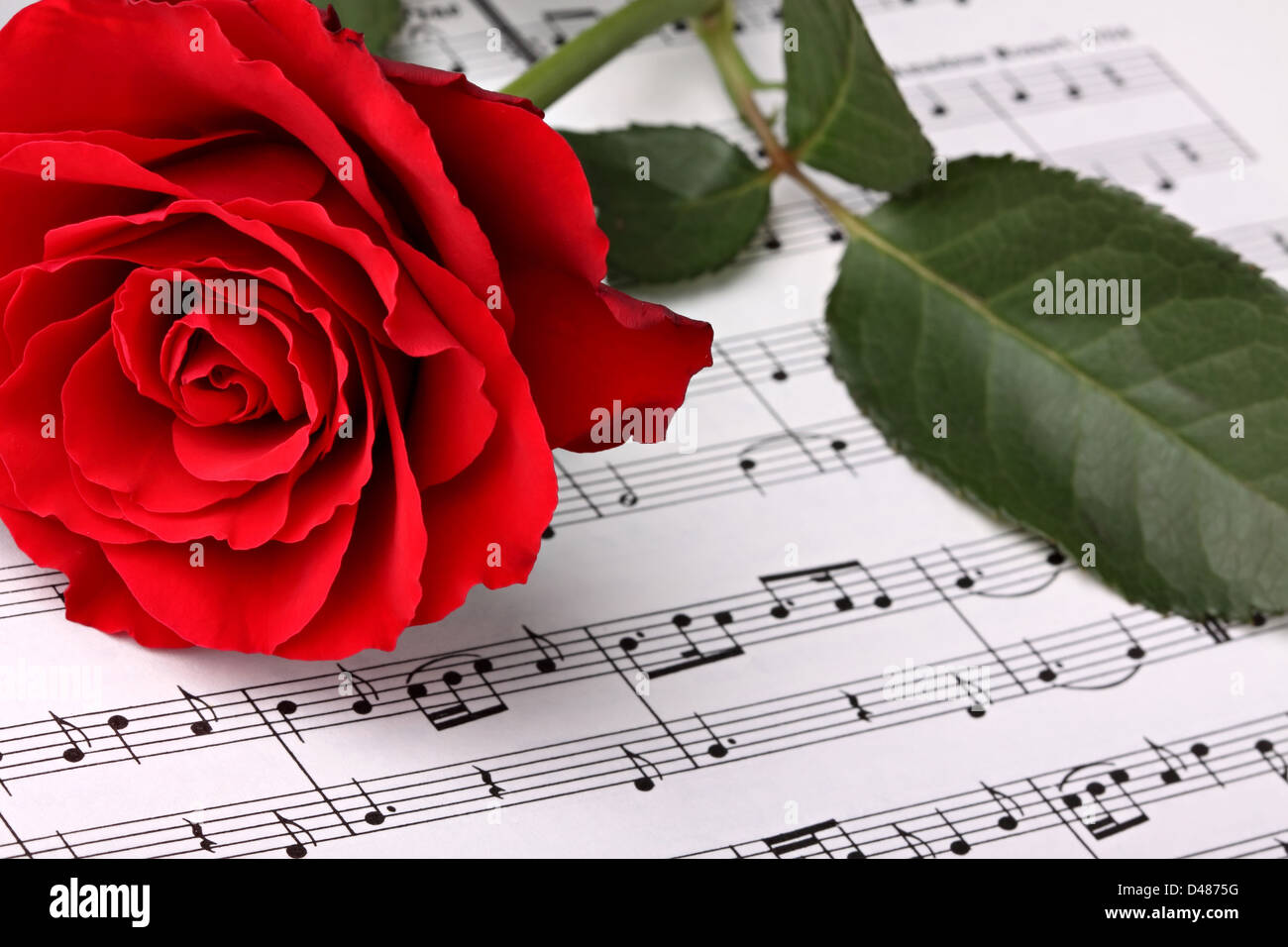 red rose on music sheet. - Stock Image