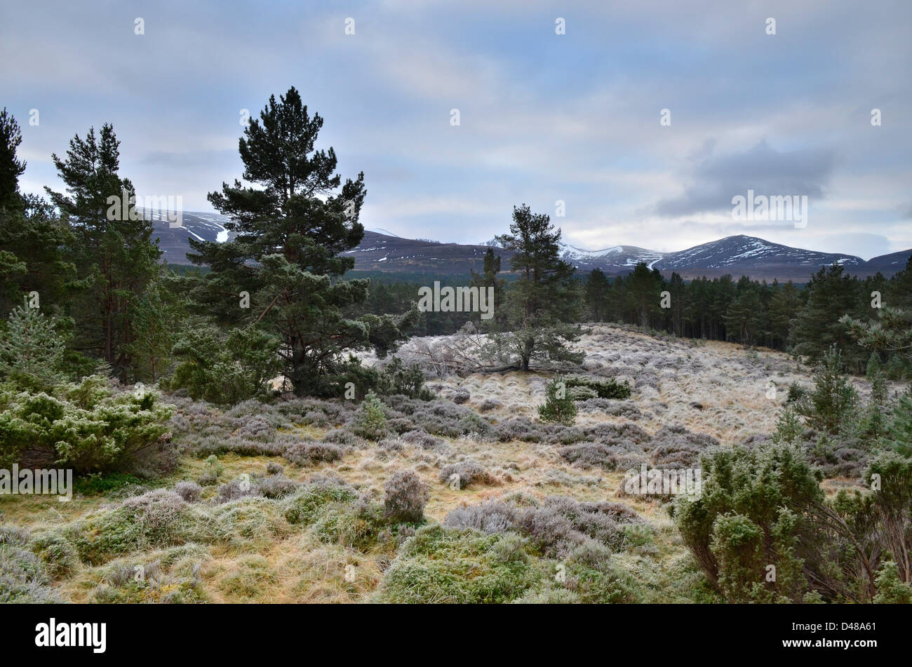 View from the ancient Glenmore Forest near to Aviemore in the Scottish Highlands, UK Stock Photo