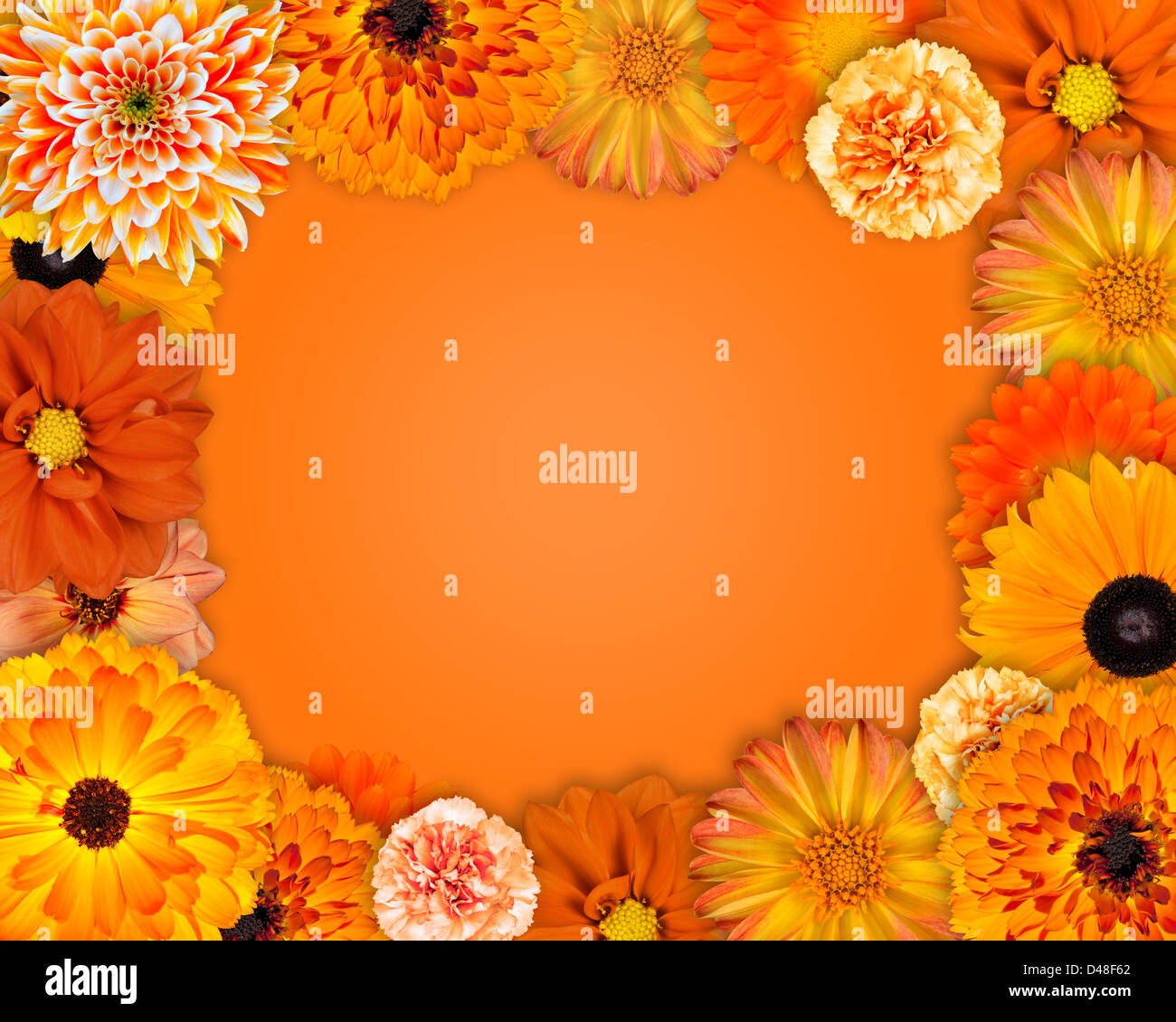 Flower Frame With Orange Flowers Isolated On Orange