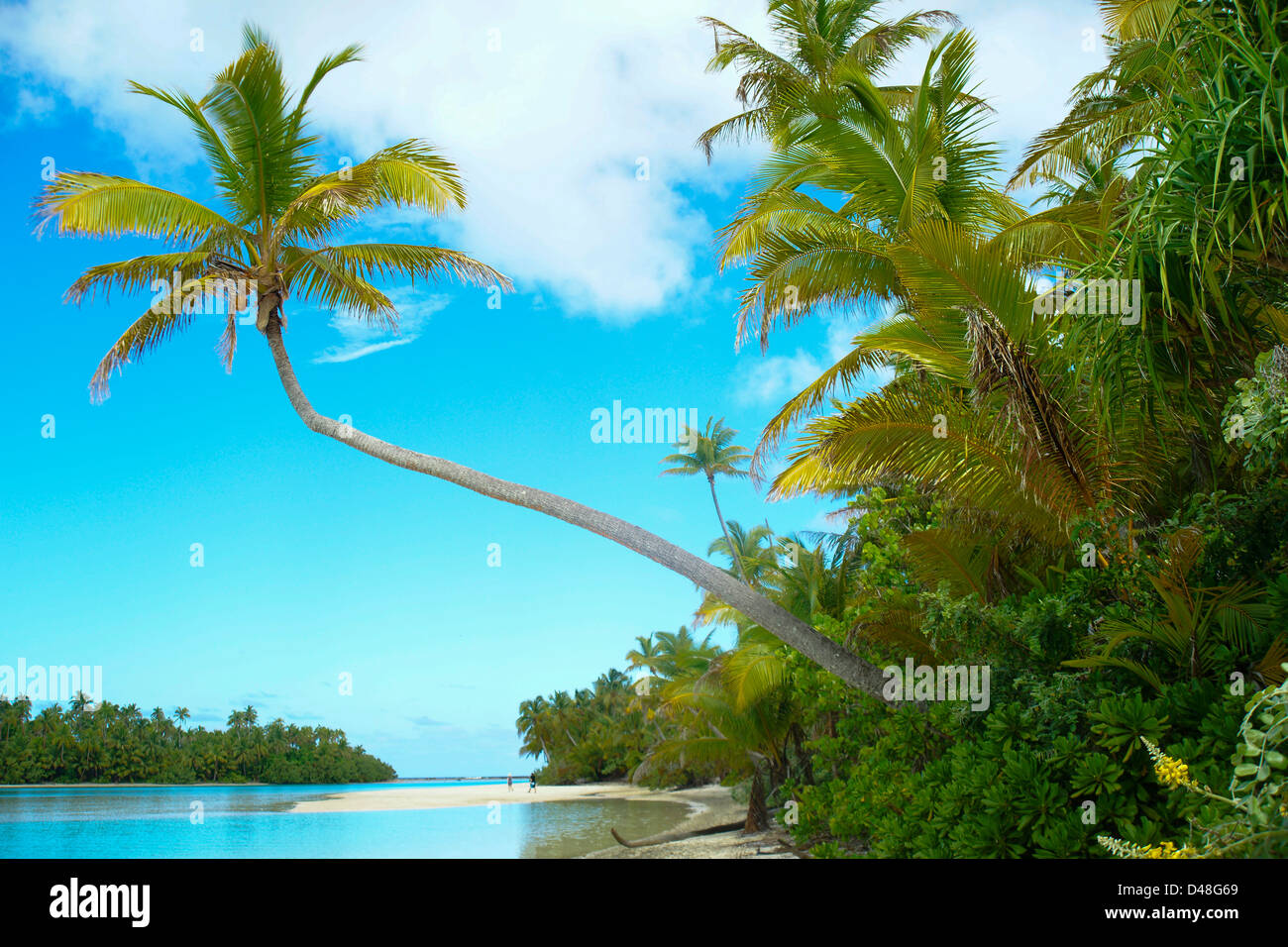 Coconut palm trees lean over a beautiful tropical beach. - Stock Image