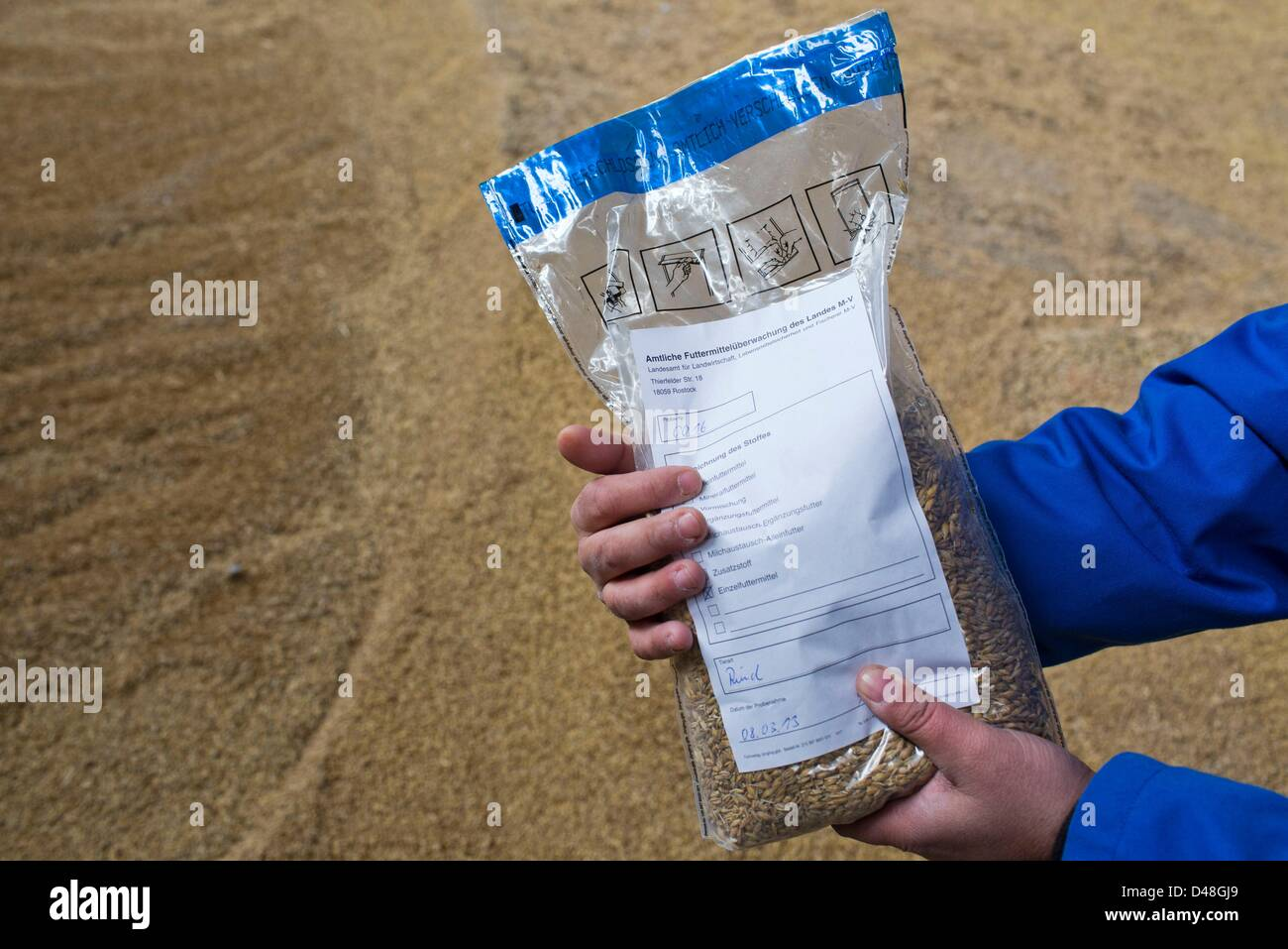View of a sample bag of the state office for agriculture, food safety and fishing fills barley into official bags - Stock Image