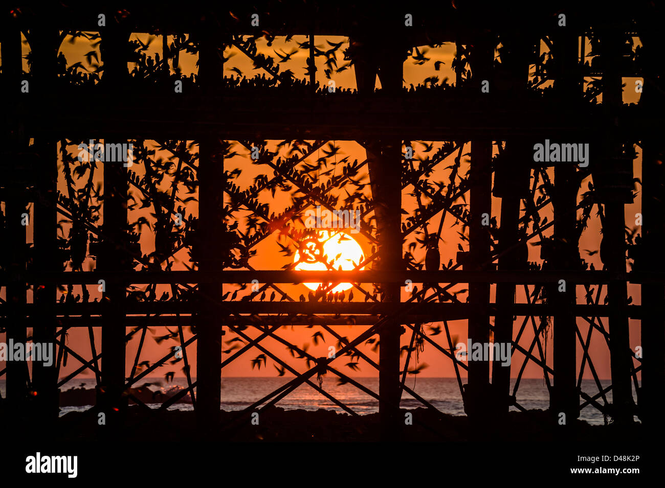 Aberystwyth Wales uk. A murmuration of starlings roosting on the cast iron legs of Aberystwyth pier at sunset - Stock Image