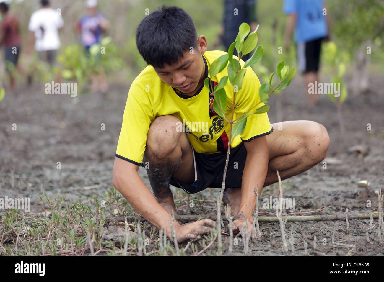 Reforestation Stock Photos & Reforestation Stock Images - Alamy