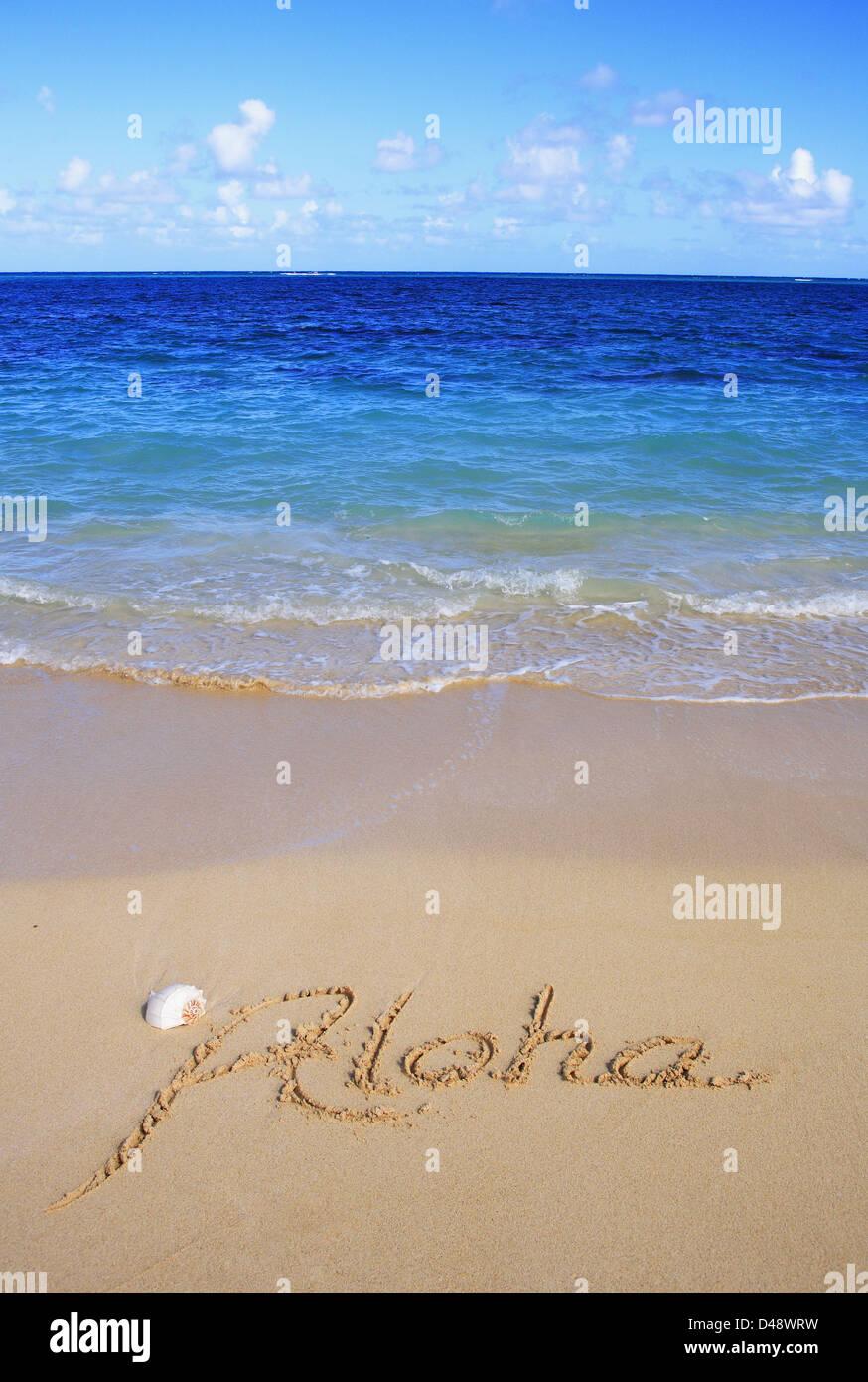 Aloha Hawaii Shell