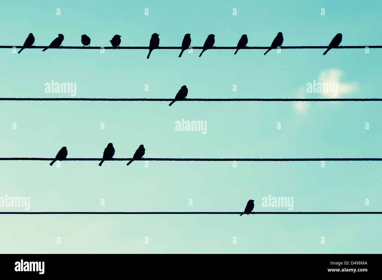 Birds on power cables, like musical notes. - Stock Image