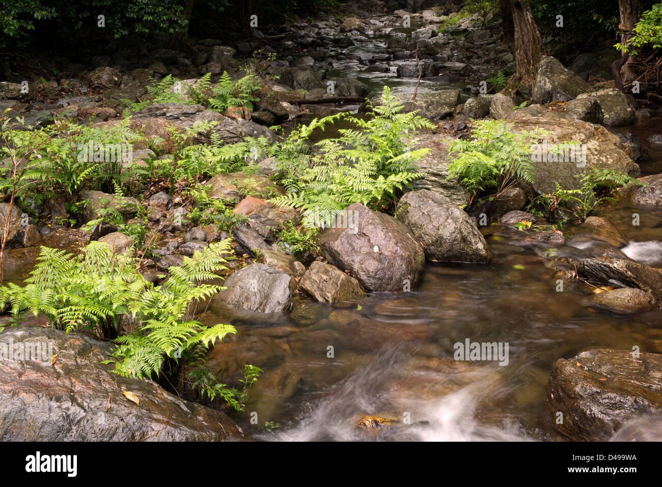 Stony Creek near Cairns, Far North Queensland, Australia - Stock Image