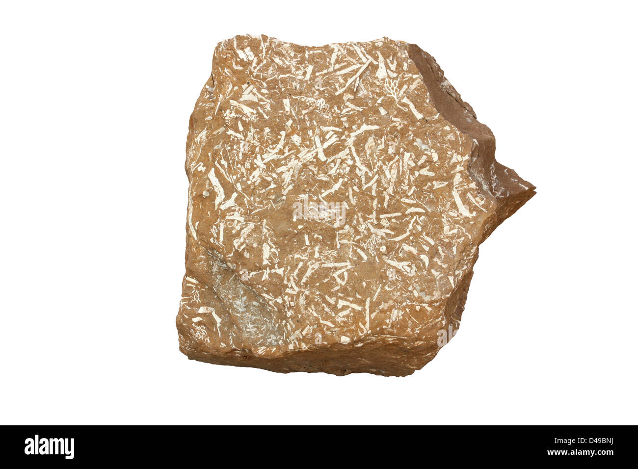 Oil shale - Stock Image