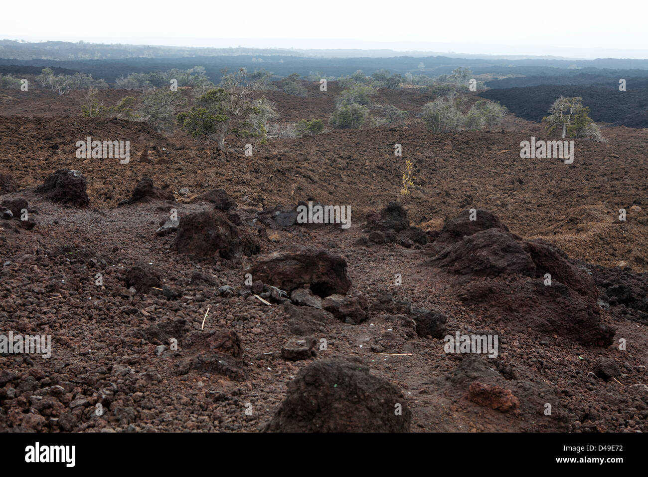 Trees  in lava landscape at The Big Island, Hawaii, USA - Stock Image