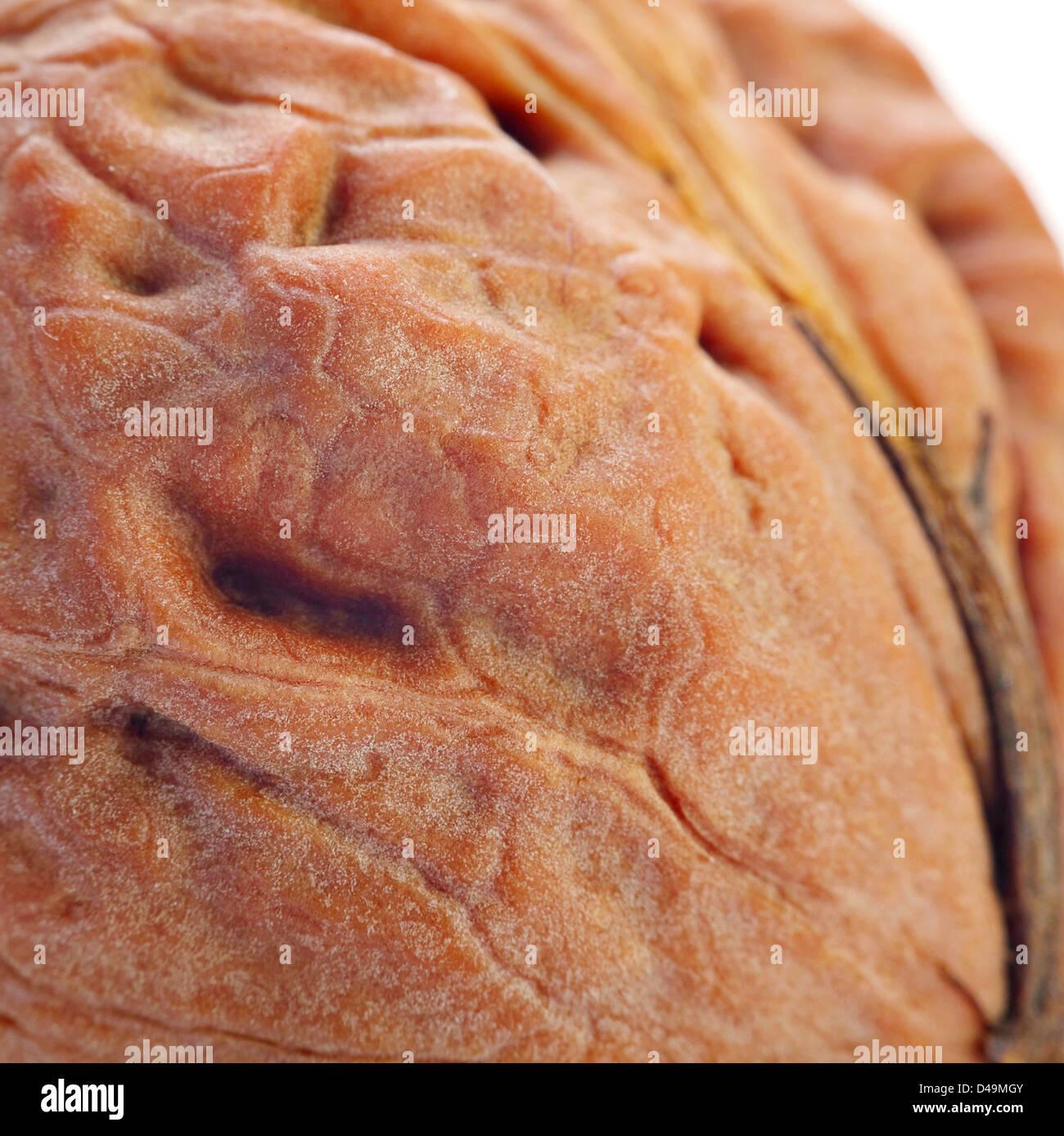 Giant walnut macro view - Stock Image