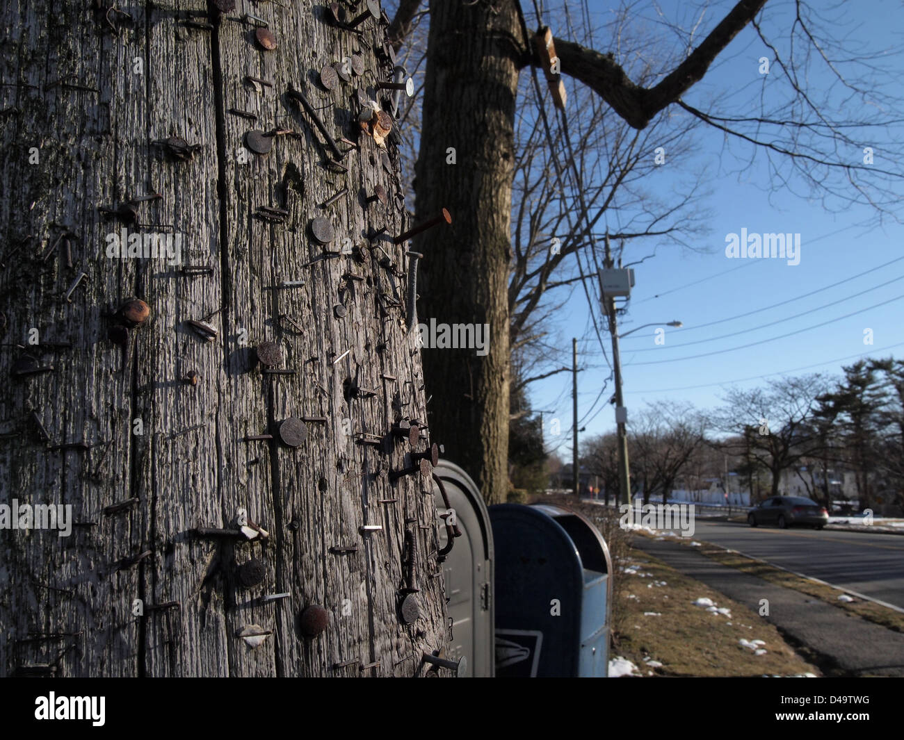 A multitude of nails and staples from years of posting cover a utility pole, New York, USA, March 9, 2013, © - Stock Image