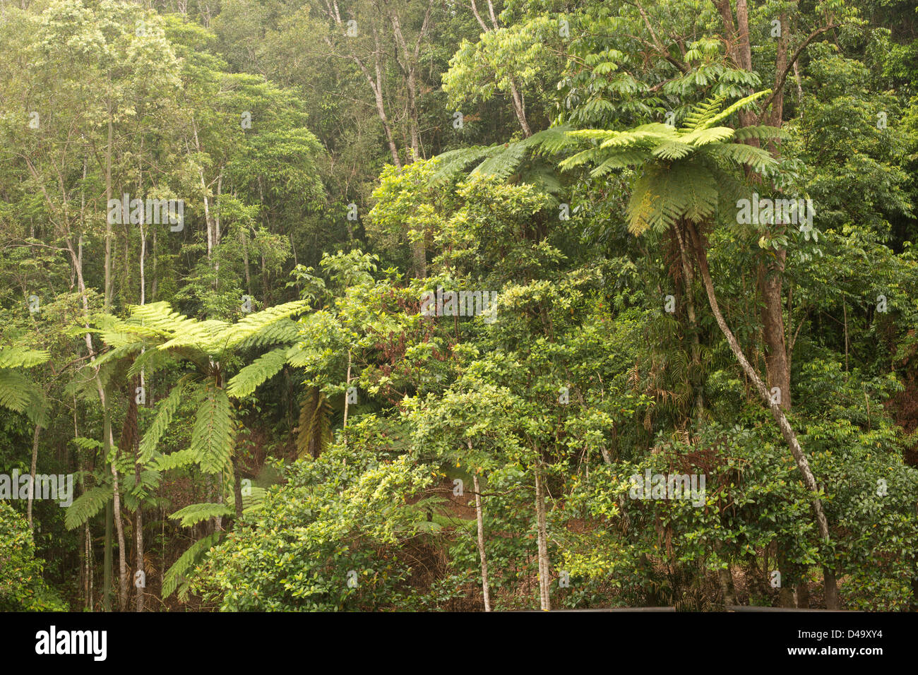 Traveling the Lake Morris Road, Cairns, Far North Queensland, Australia - Stock Image