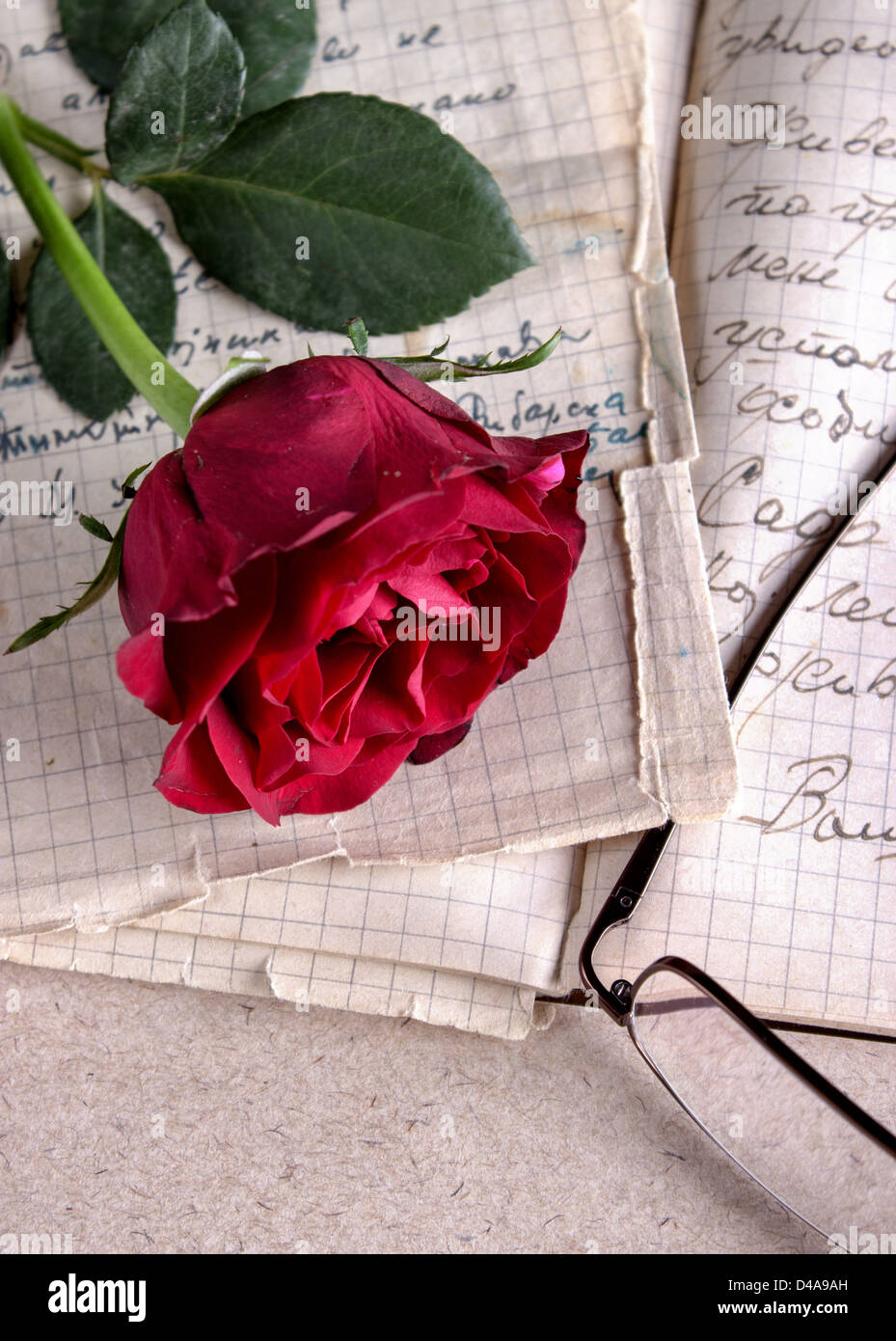 Red Rose on Old Paper.Love Letter - Stock Image