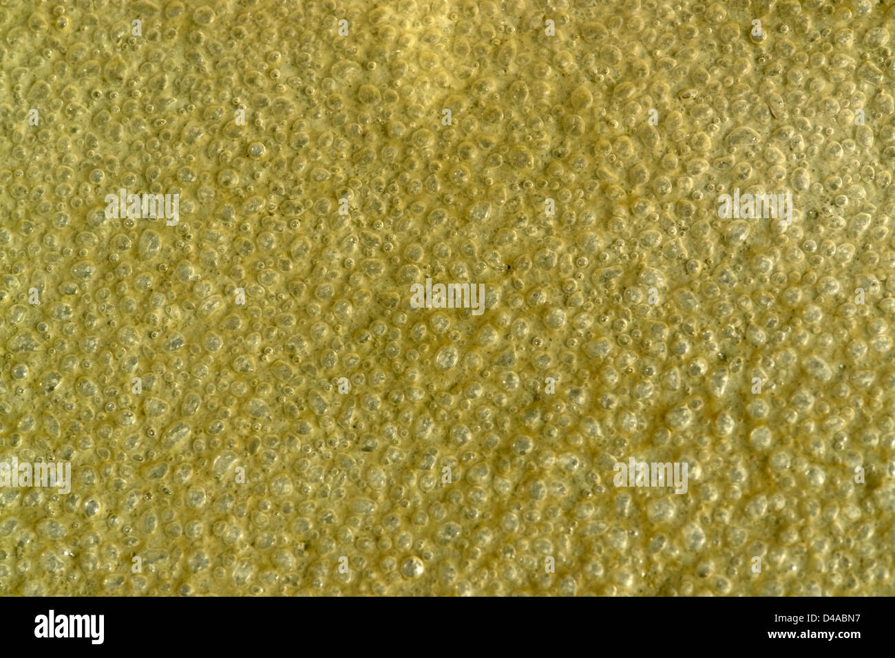 abstract detail of a strange organic substance with lots of small bubbles inside - Stock Image