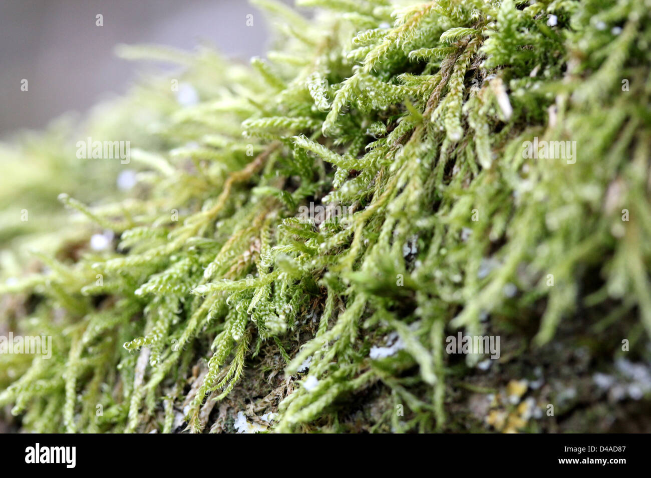 Green moss growing on tree branch Stock Photo