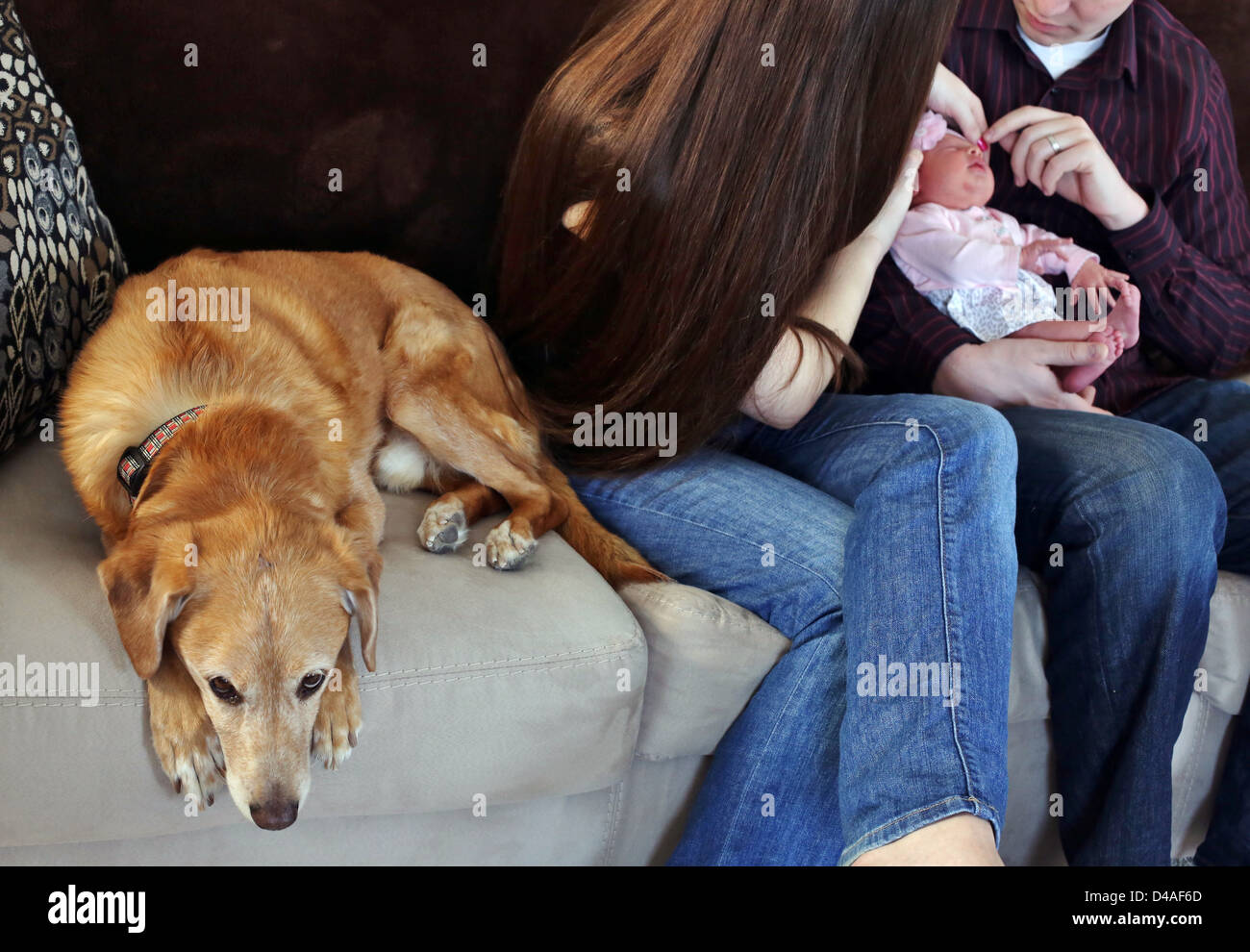 A dog looking jealous and left out while his owners fuss over a new baby. - Stock Image