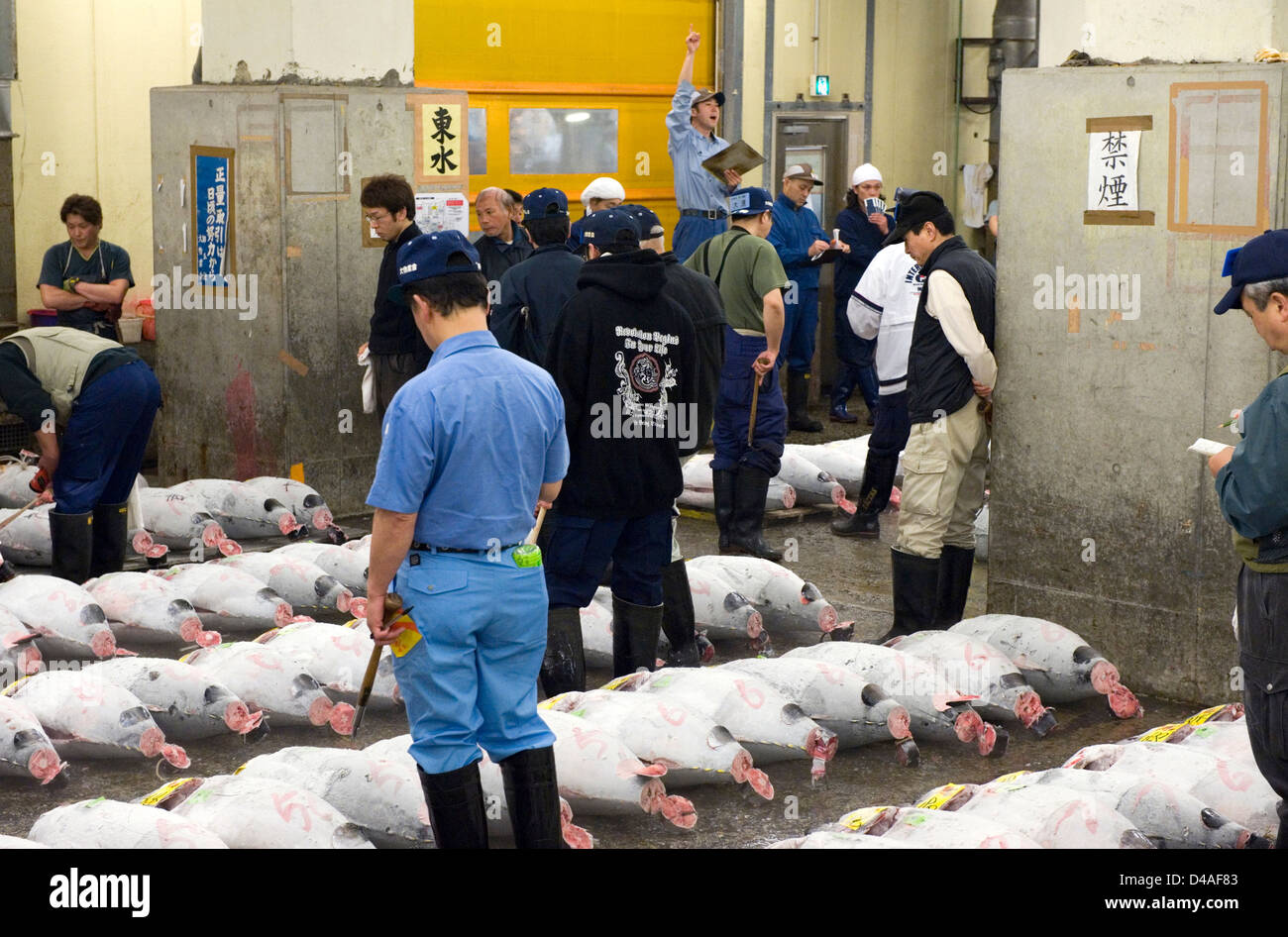 Auctioneer shouts out as buyers walk amongst frozen tuna at Tsukiji Wholesale Fish Market auction in Tokyo, Japan. - Stock Image